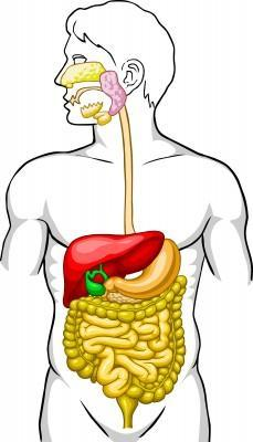 Blood in stool can originate anywhere in GI tract