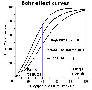 Bohr effect curves