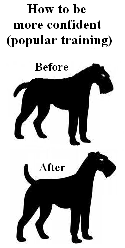 How to be more confident (popular training): dog before and after