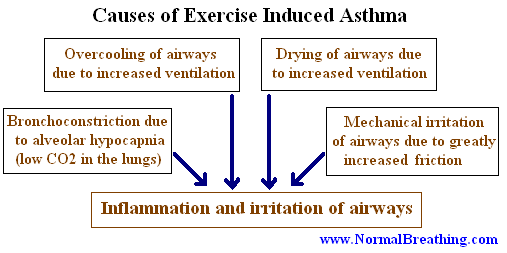 Causes and mechanism of exercise-induced asthma