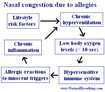 Nasal congestion due to allergies: diagram