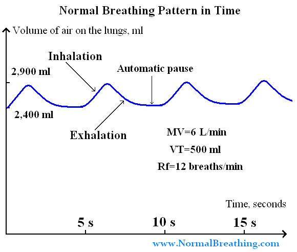 Normal Breathing (Respiration) Pattern Cycle: Chart in Time