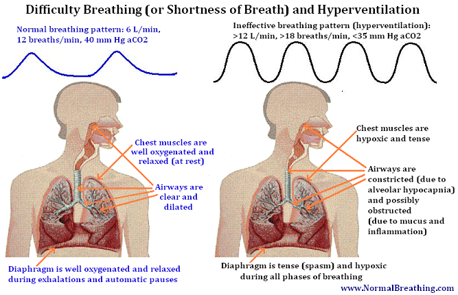 Dyspnea mechanism or how one become shorter in breathe