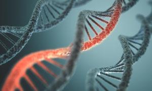 tissue hypoxia gene expression